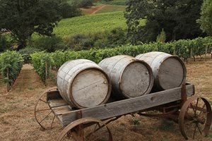 Experience the charm of Sonoma Wine Country at one of the various vineyards within driving distance of our hotel